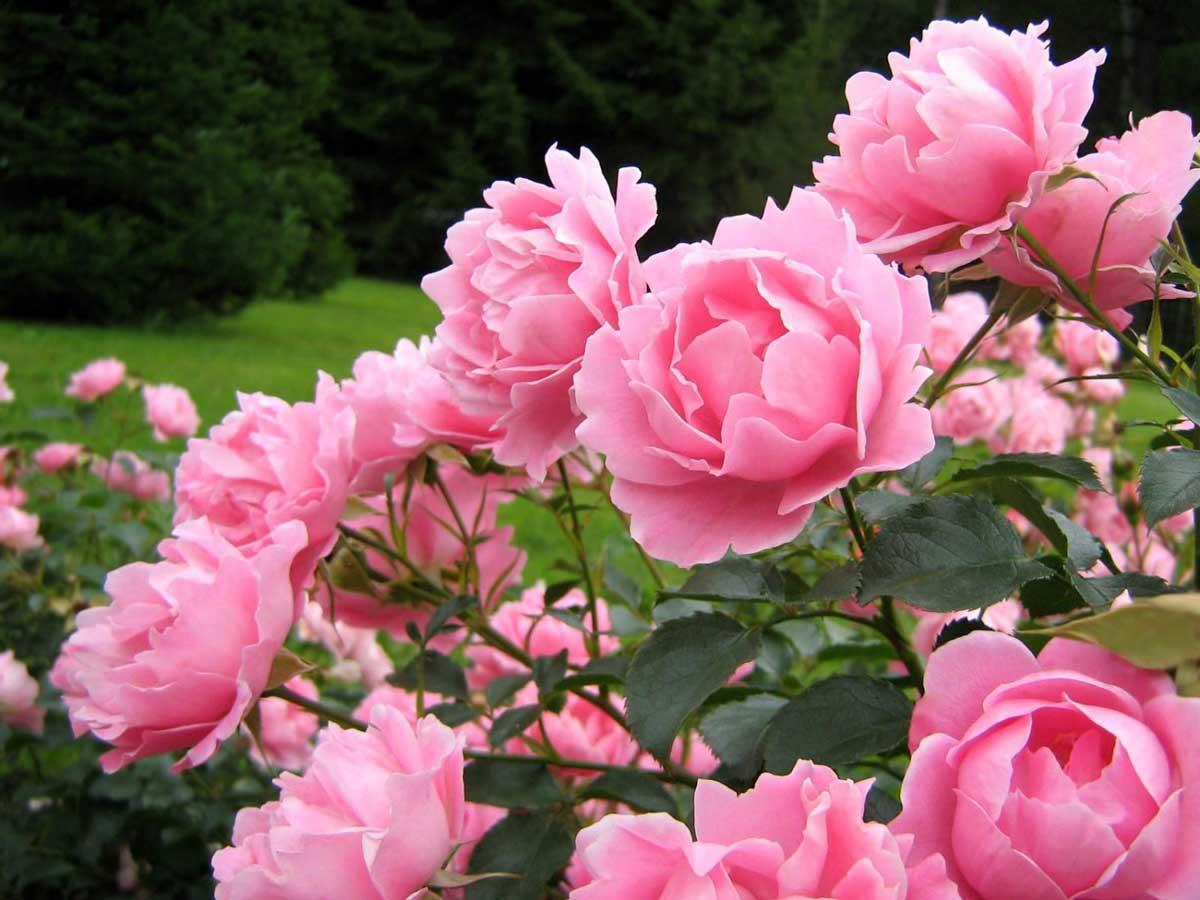 تصاویر زیبا از گلهای بهاری | زن امروزی
