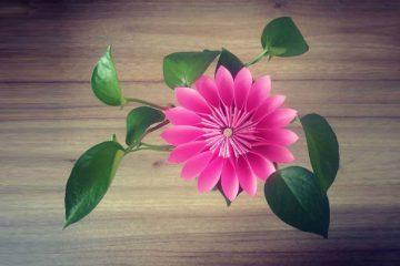 آموزش ساخت اوریگامی گل کاغذی - زن امروزی